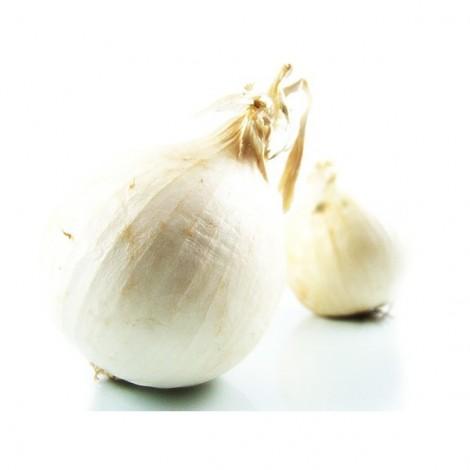 Oignon blanc doux