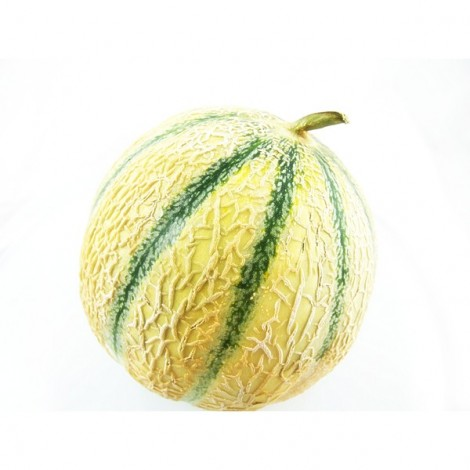 Melon Philibon - France