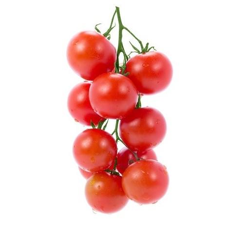 Tomate cerise grappe - Belge