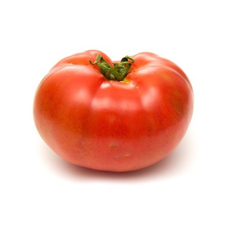 Tomate grosse - Belge